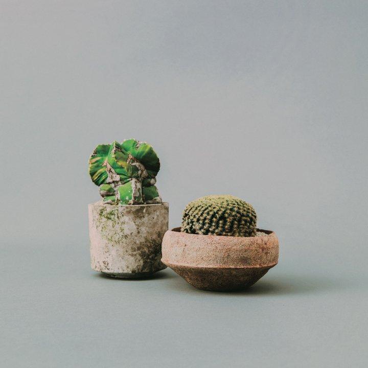 センスのいい人が選ぶ、今これ欲しい!3選 《Qusamura》の植物、《ジェルデ》のデスクランプ…etc.