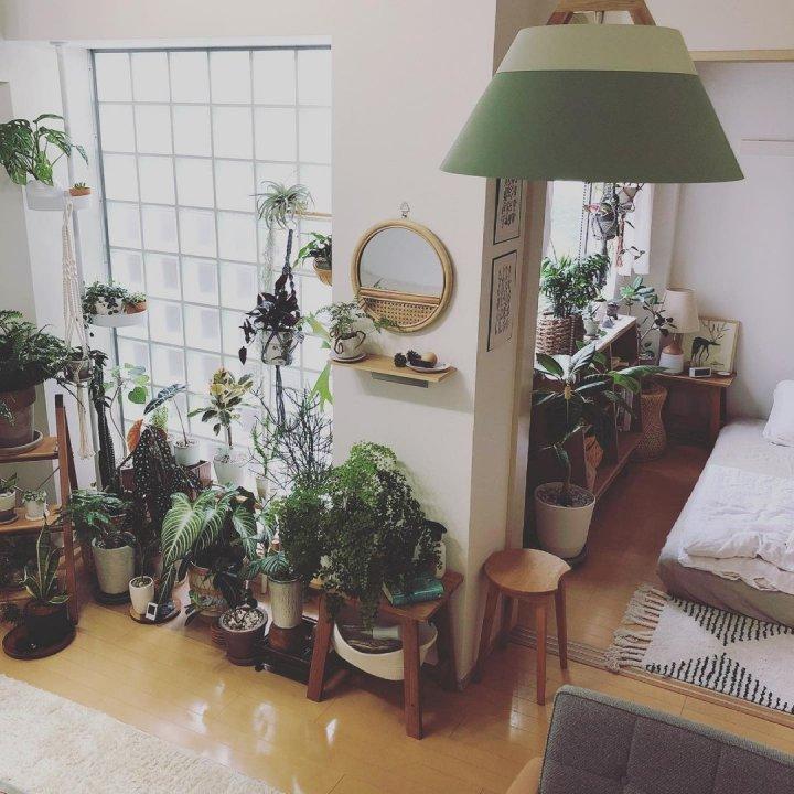 個性ある植物がのびのびと暮らす、2LDKインテリア【私らしく暮らす】